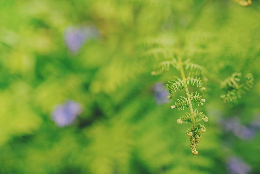 loch lomond nature
