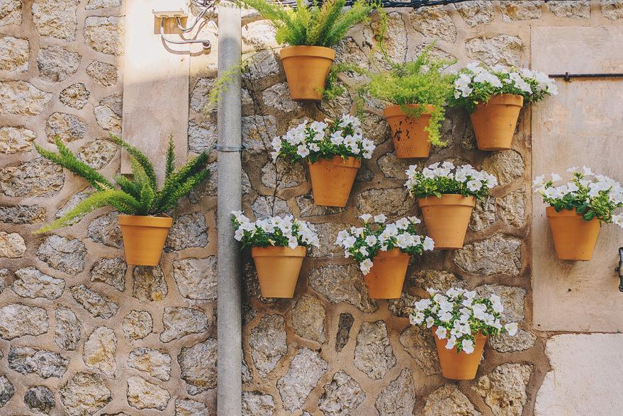 valdemossa flowers